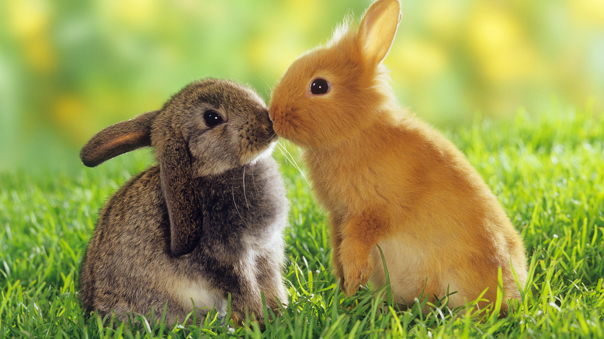 cute bunny pictures 1813