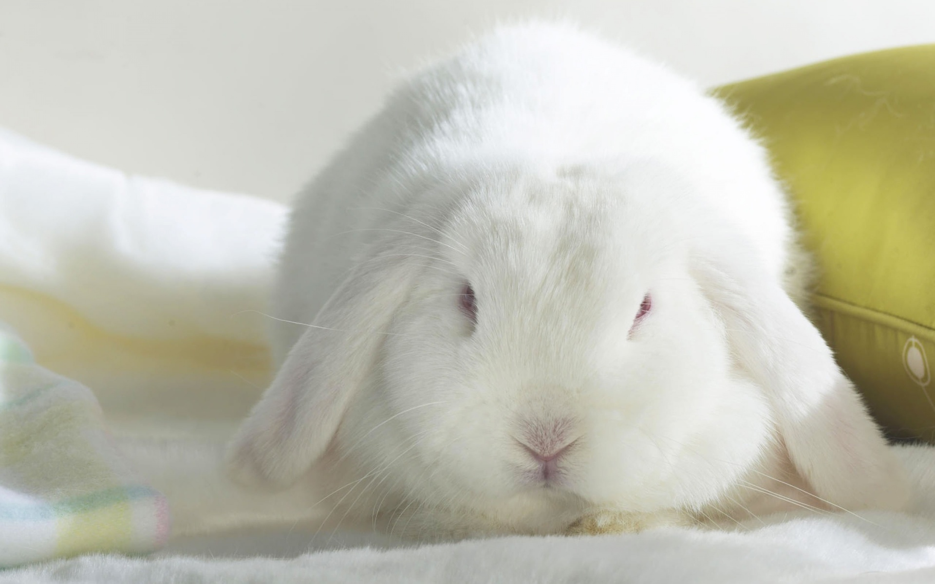 cute bunny pictures 1817