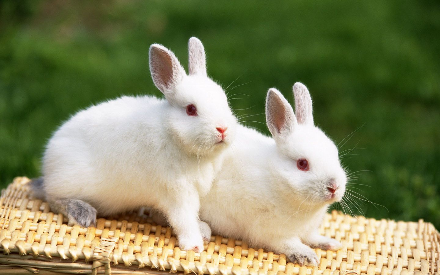 cute bunny pictures 1829