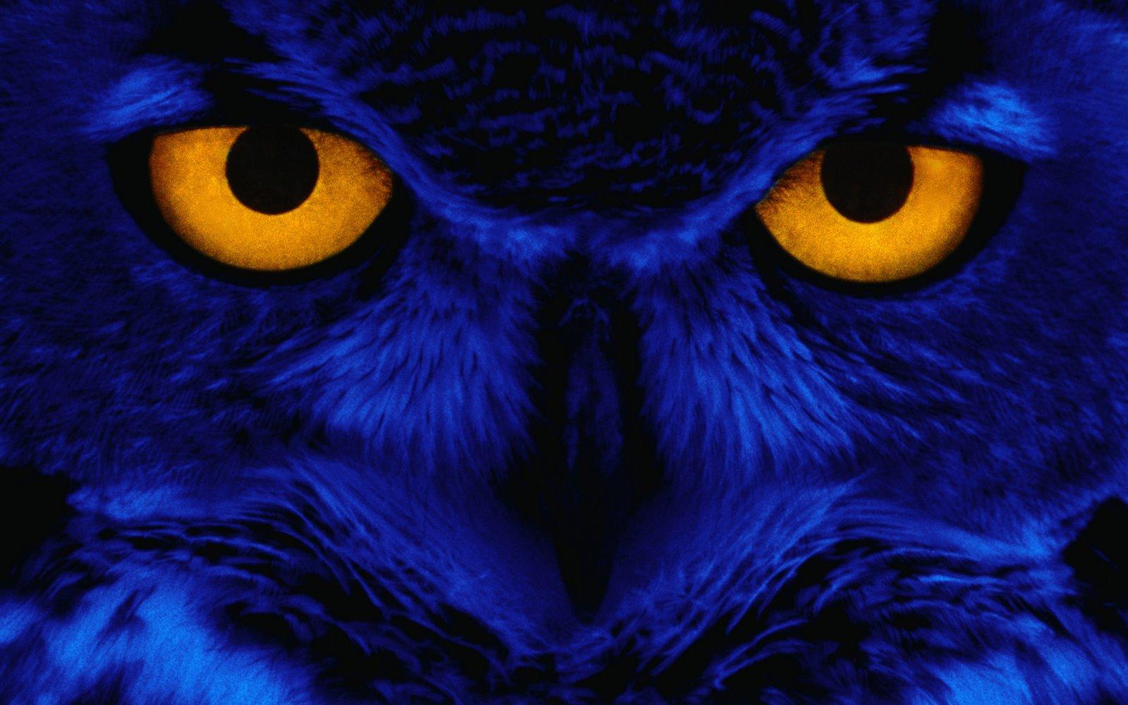 Halloween Wallpaper 1592 1600x1000 px ~ HDWallSource.com