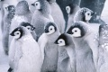 Cute Baby Penguins 1873