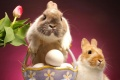 Cute Bunny Pictures 1823