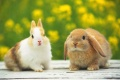 Cute Bunny Pictures 1825