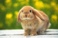 Cute Bunny Pictures 1828