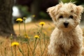 Dogs Wallpaper 831
