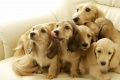 Dogs Wallpaper 851