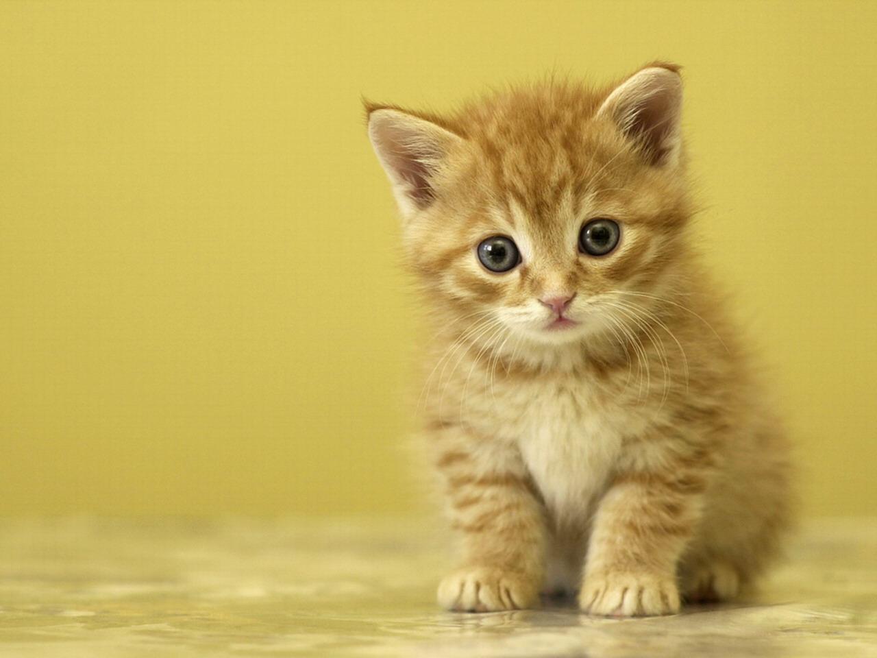 cute baby kittens 2192