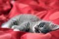 Cute Baby Kittens 2216