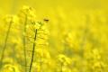 Yellow Flower Wallpaper 1087