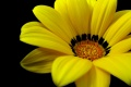 Yellow Flower Wallpaper 1101