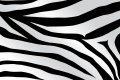 Zebra Print Wallpaper 2734