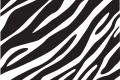 Zebra Print Wallpaper 2735