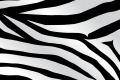 Zebra Print Wallpaper 2741