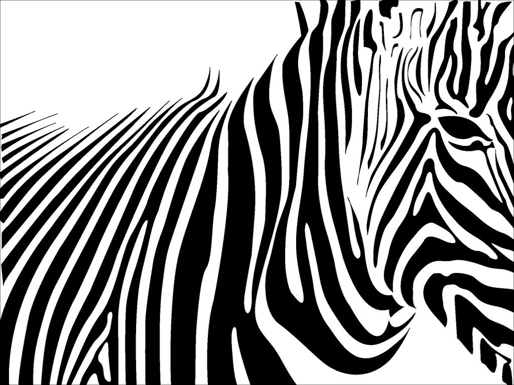 Zebra Print Wallpaper 2746 1024x768 px HDWallSourcecom