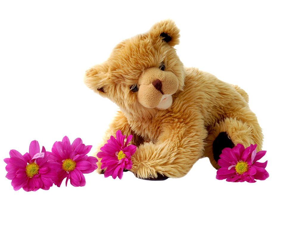 cute teddy bear 1426