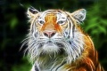 Tiger Wallpaper 2390