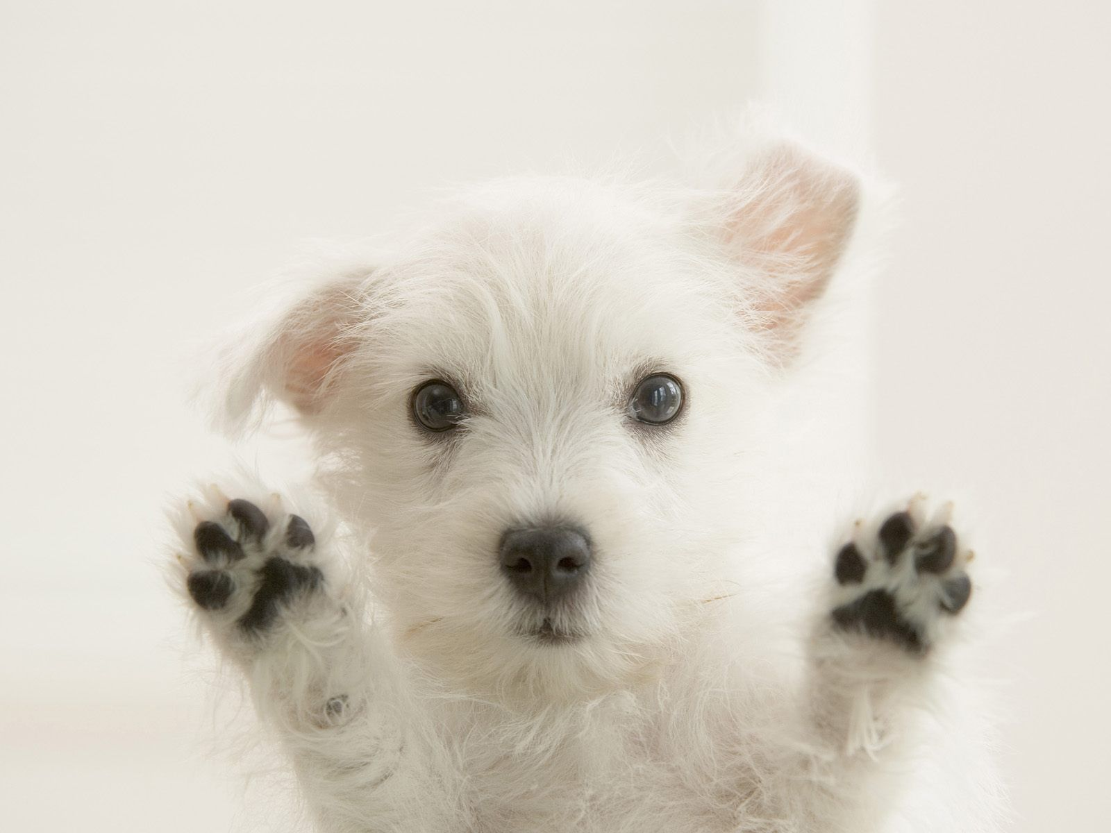puppy wallpaper 318