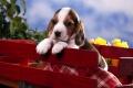 Puppy Wallpaper 314