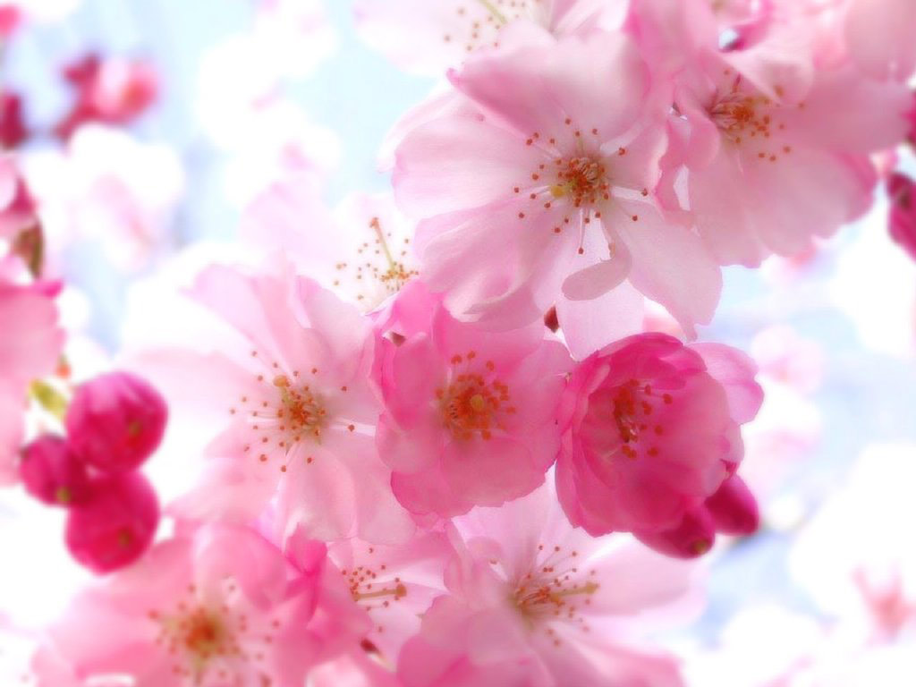 23 amazing flowers ndash - photo #39