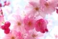 Flower Wallpaper 631