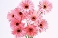 Flower Wallpaper 647