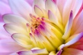 Flower Wallpaper 654