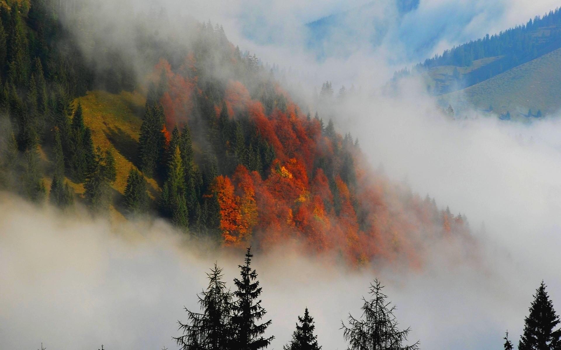 beautiful fog wallpaper 36613