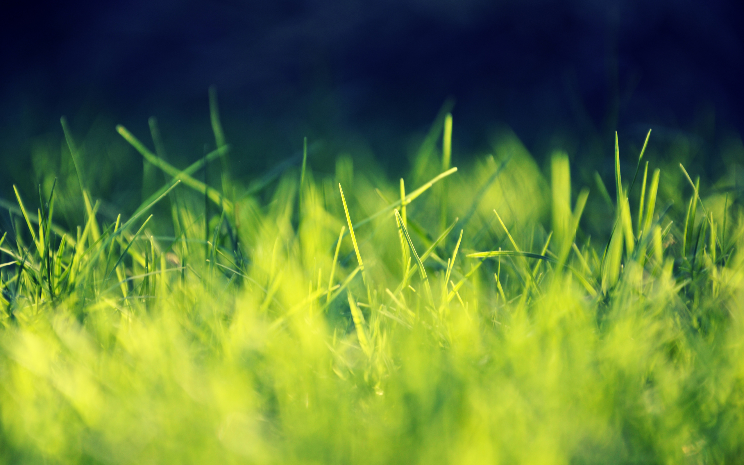 cool grass wallpaper 39859