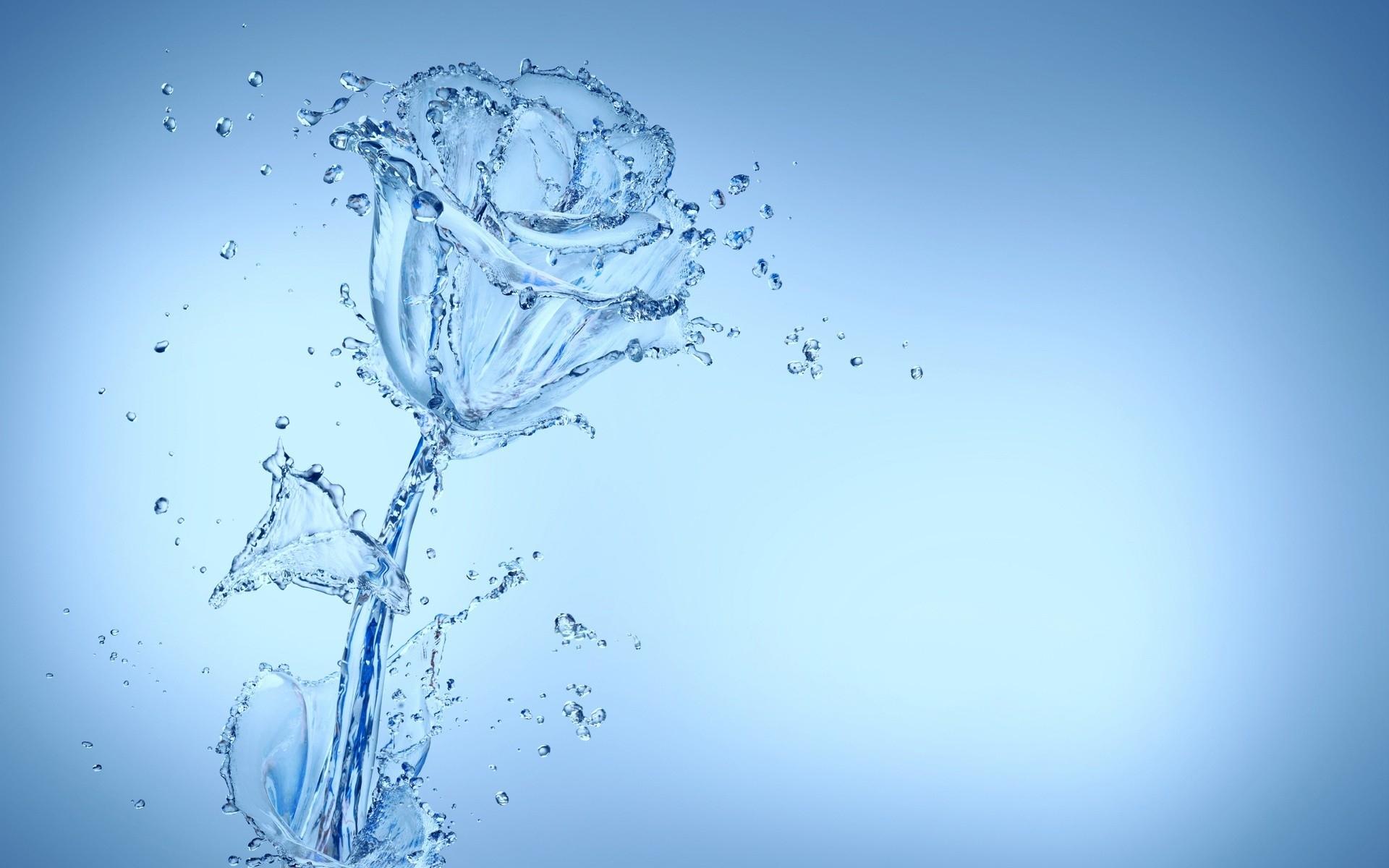 Cool Water Flower Wallpaper 37544 1920x1200 Px