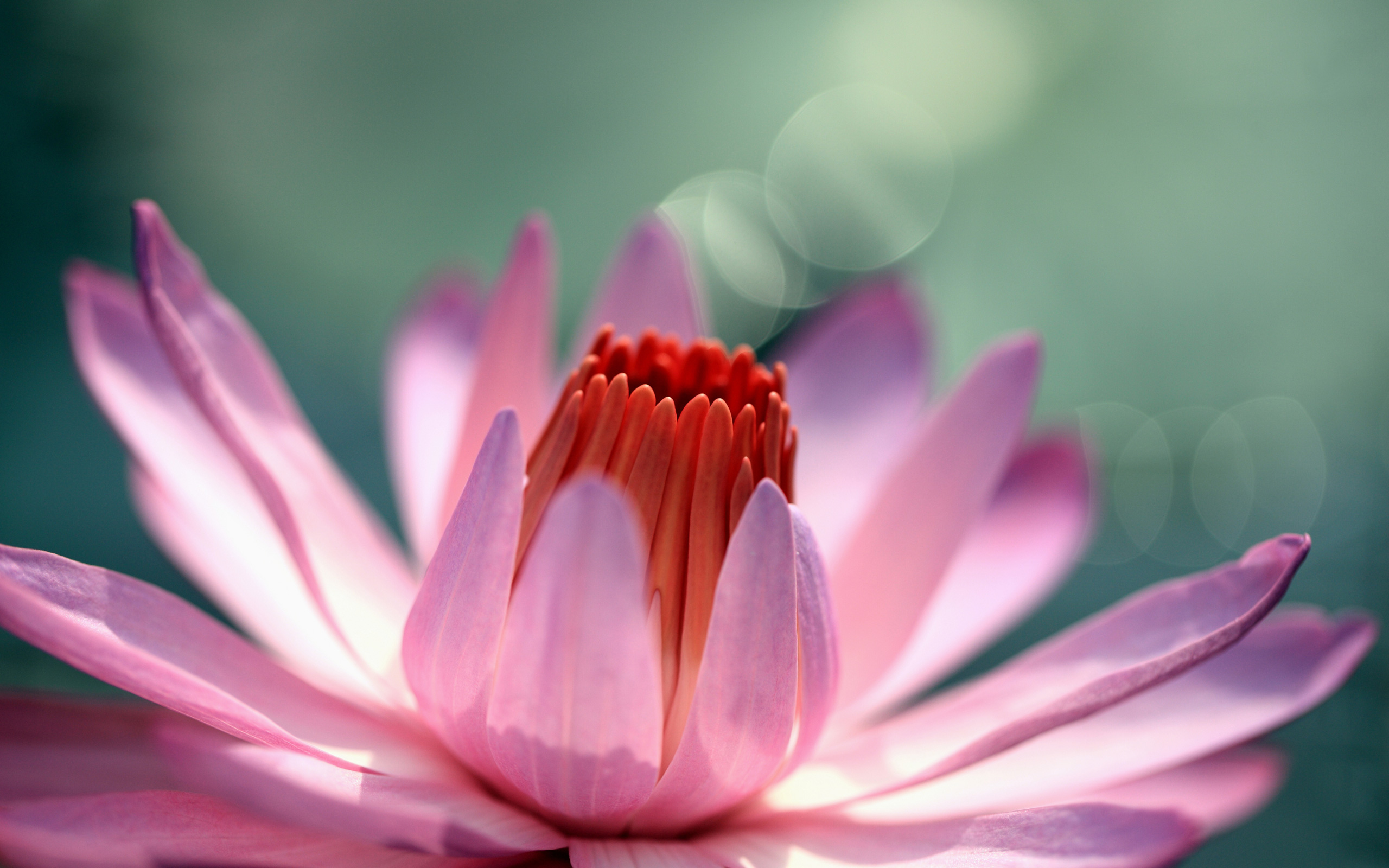 fantastic water flower wallpaper 37547
