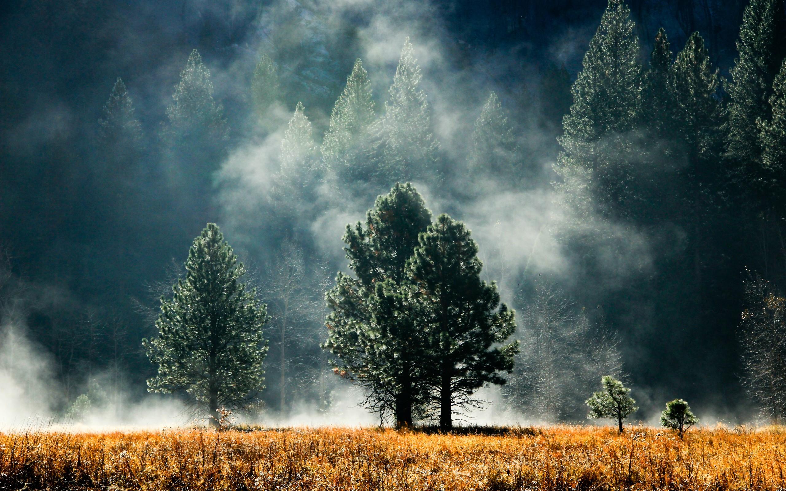 Fog wallpaper hd 36614 2560x1600 px hdwallsource fog wallpaper hd 36614 voltagebd Choice Image