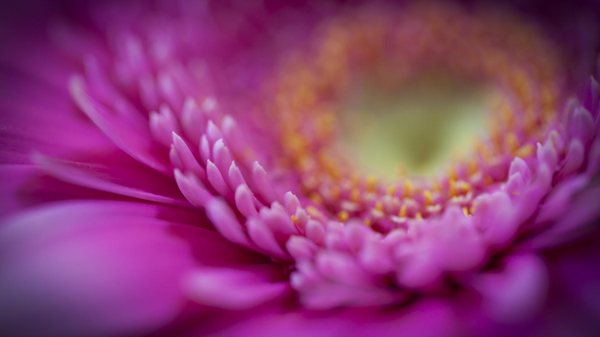 macro flowers 34742