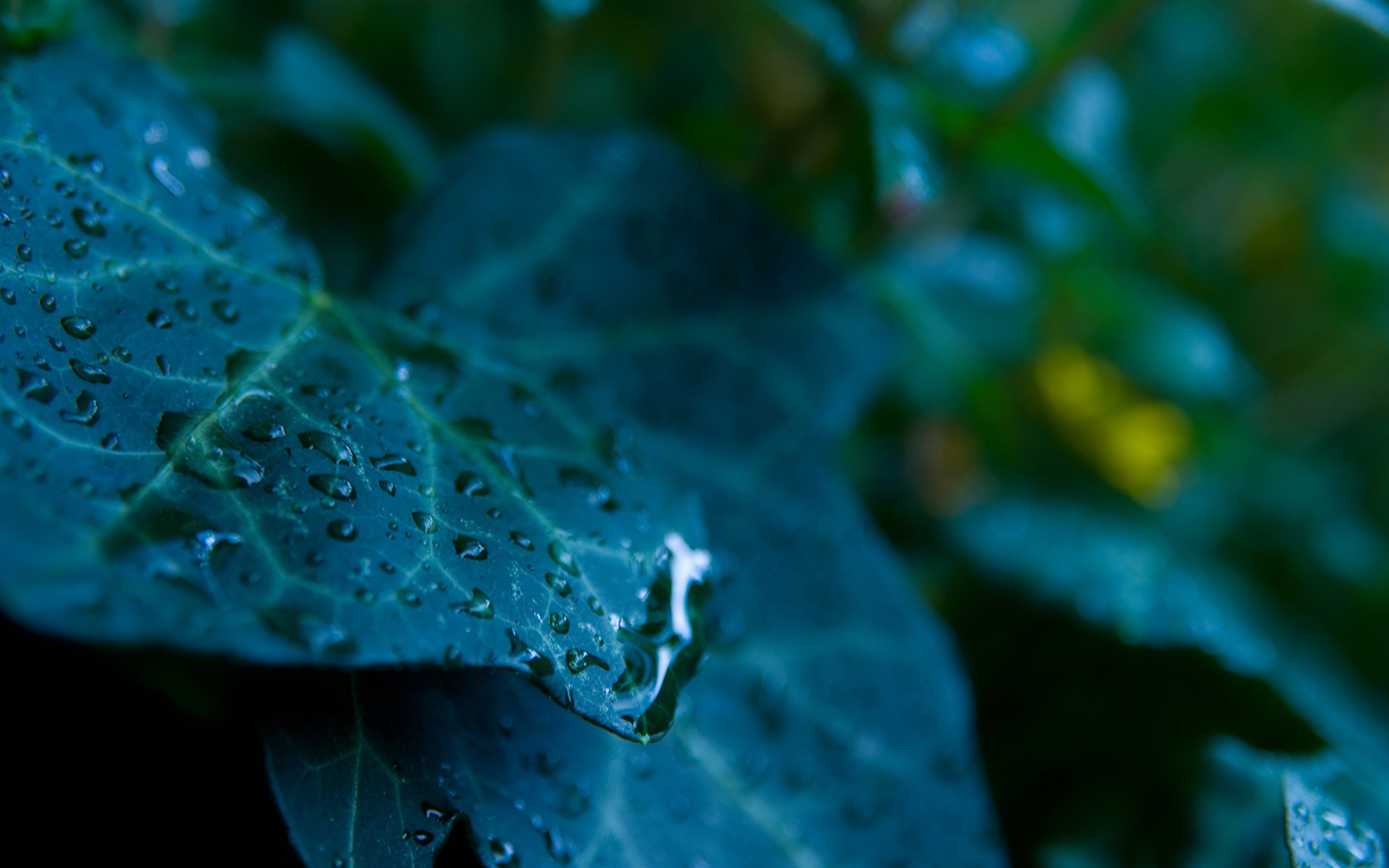 raindrops 39892