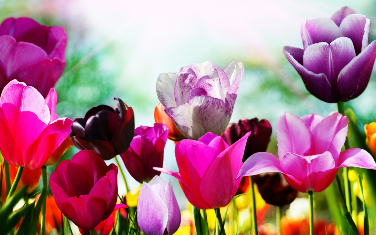 Spring flowers background 19103 1280x800px spring flowers background 19103 mightylinksfo