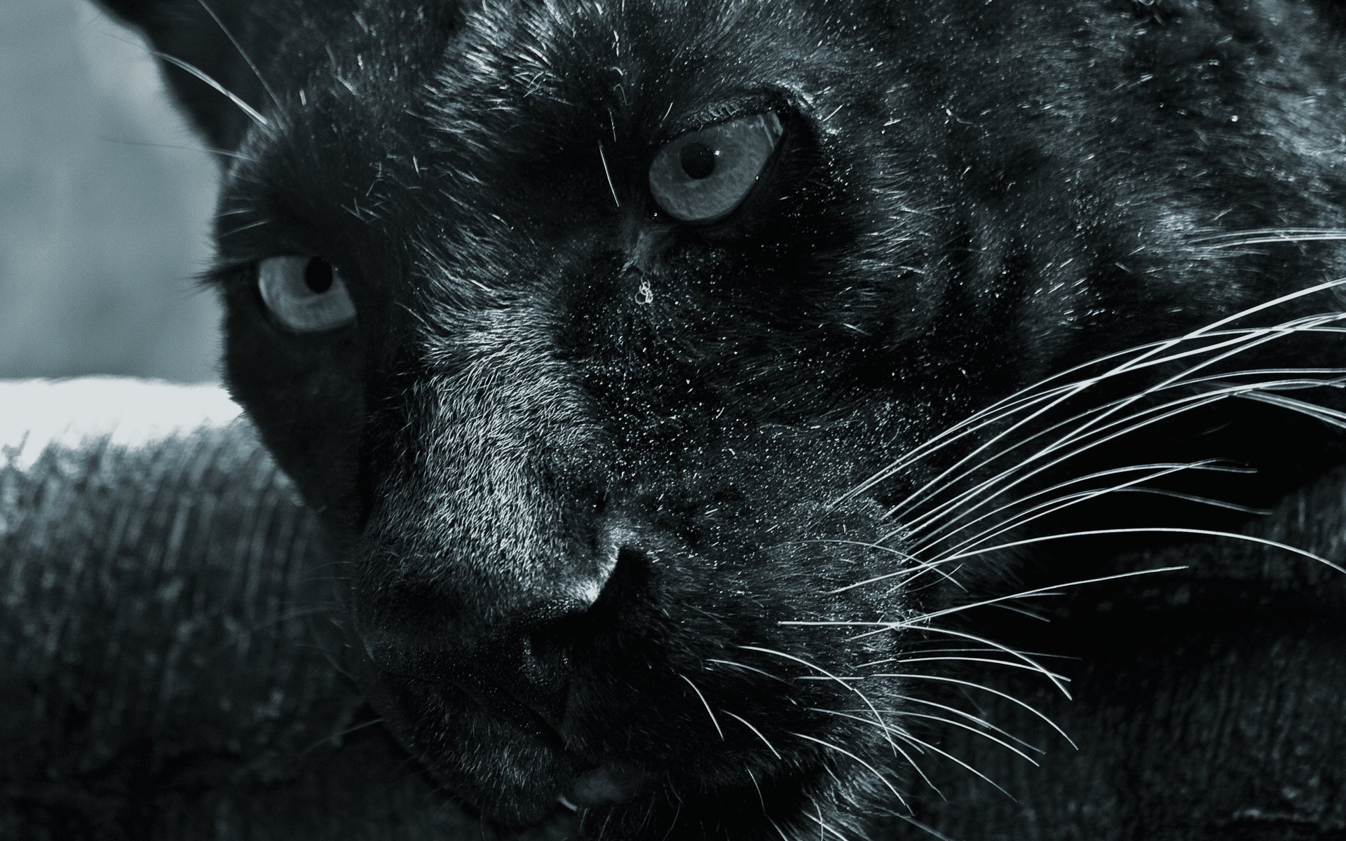 stunning animal close up wallpaper 37570