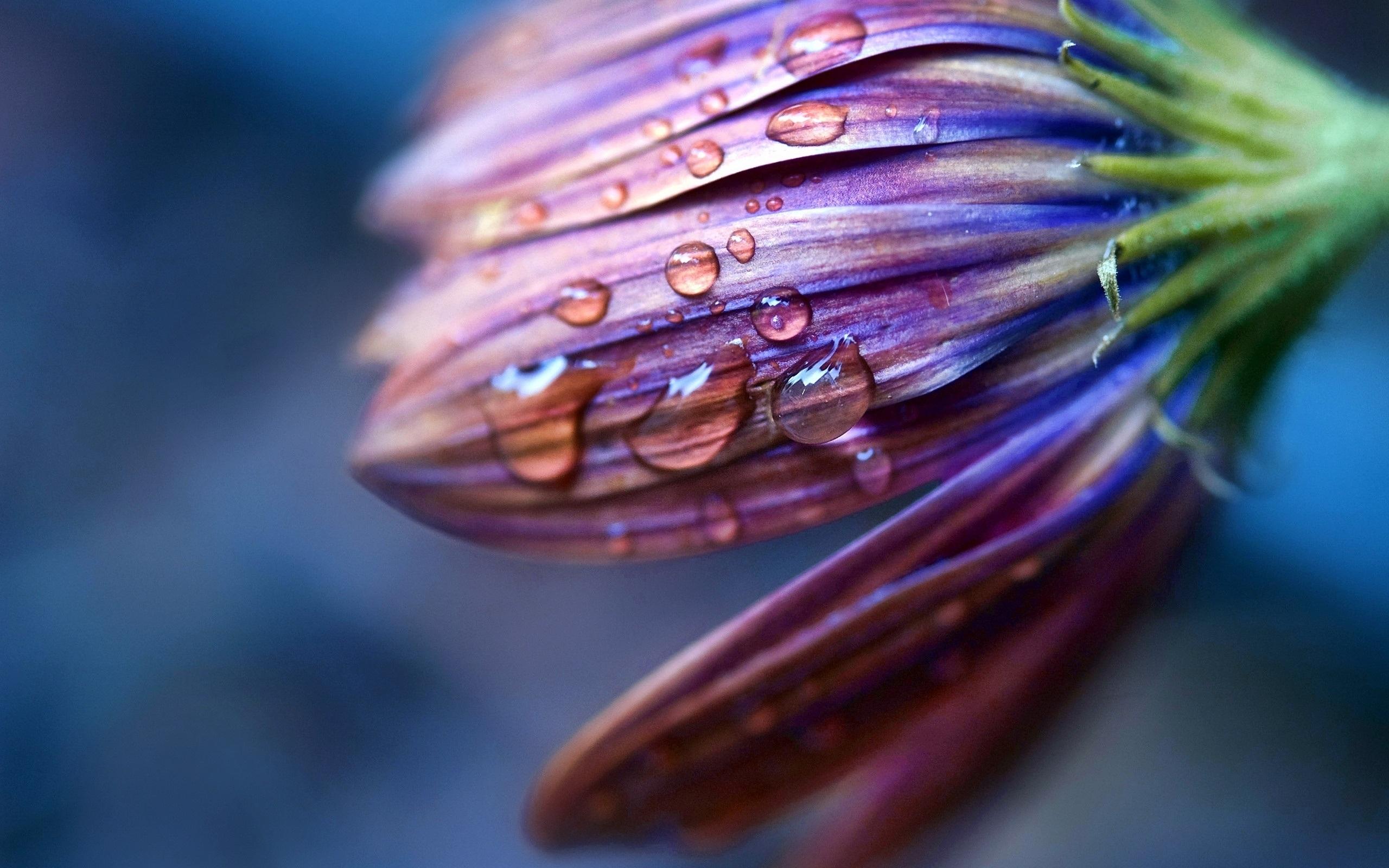 stunning water flower wallpaper 37543