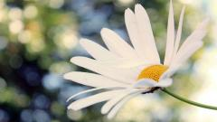 Amazing White Macro Wallpaper 37356