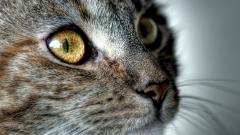 Animal Close Up HD 37571