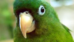 Animal Close Up Pictures 37566