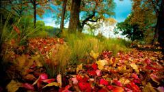 Autumn Colors 17790