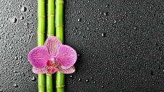 Bamboo Wallpaper HD 42173
