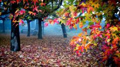 Beautiful Colors 17800