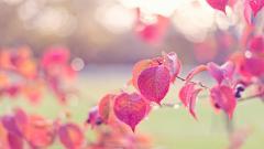 Beautiful Dew Wallpaper 39909