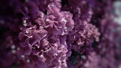 Beautiful Exotic Flowers Wallpaper 41133