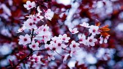 Beautiful Flower Wallpaper Tumblr 17810