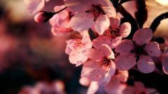Beautiful Flower Wallpapers 25400