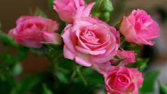 Beautiful Fuchsia Wallpaper 36662