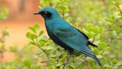 Blue Bird Pictures 39972