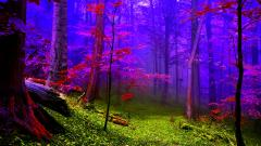 Colorful Fog Wallpaper 36631