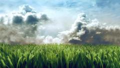 Cool Grass Wallpaper 42332